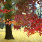 inspiring-examples-of-nature-photography-18
